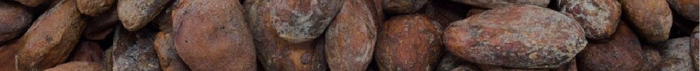 какао бобы оптом