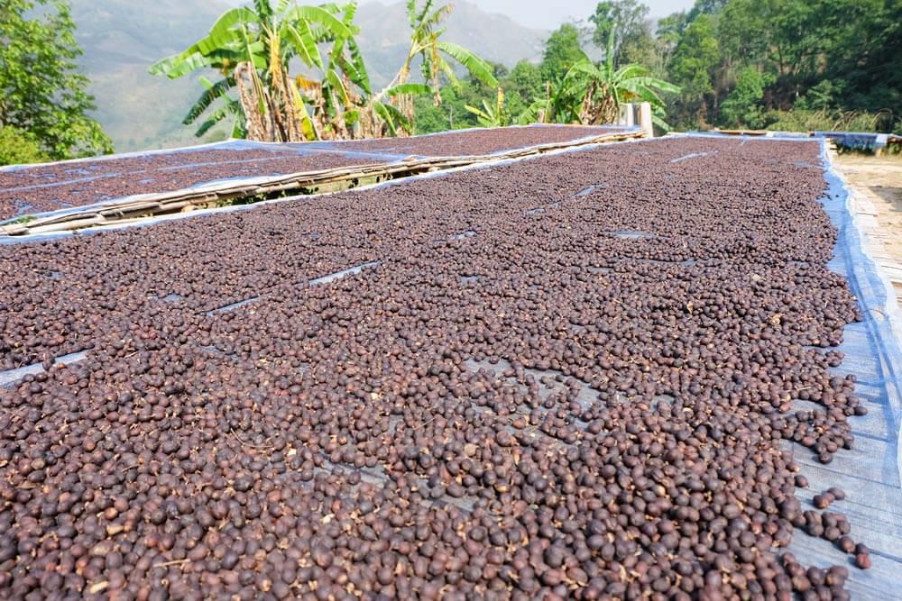 Сухая обработка зеленого кофе