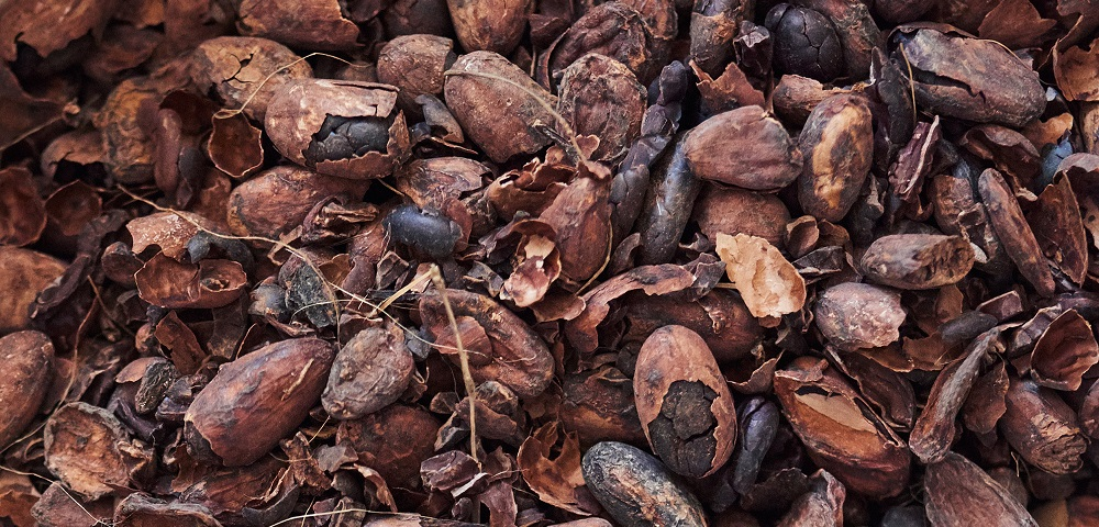 Closeup of a pile of dried cocoa bean husks and nibs ready for artisanal chocolate making