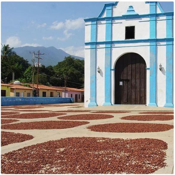 Какао-бобы criollo