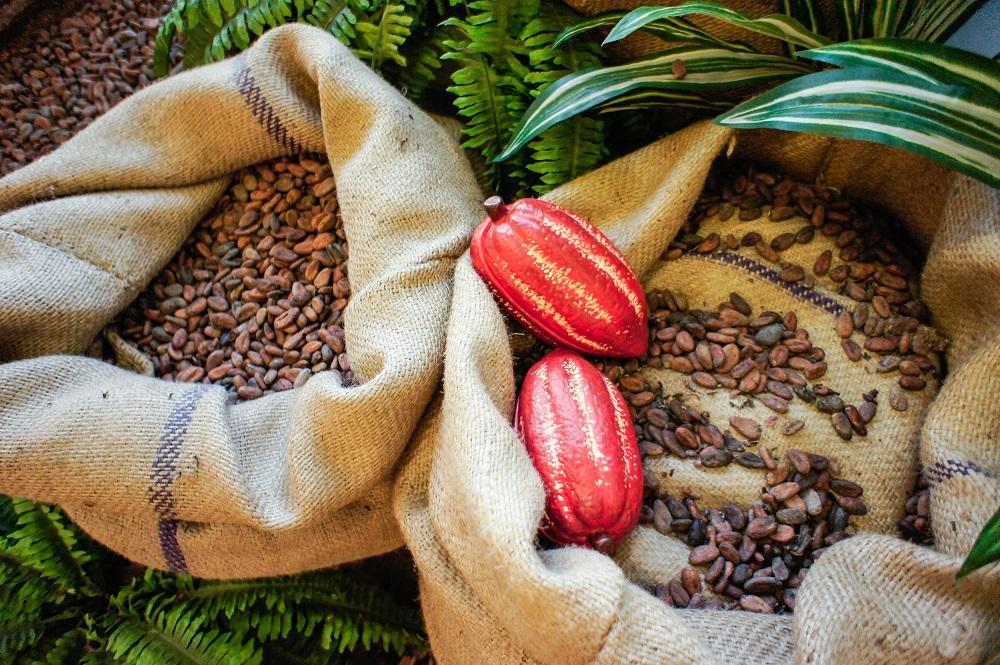 Какао бобы и фрукты