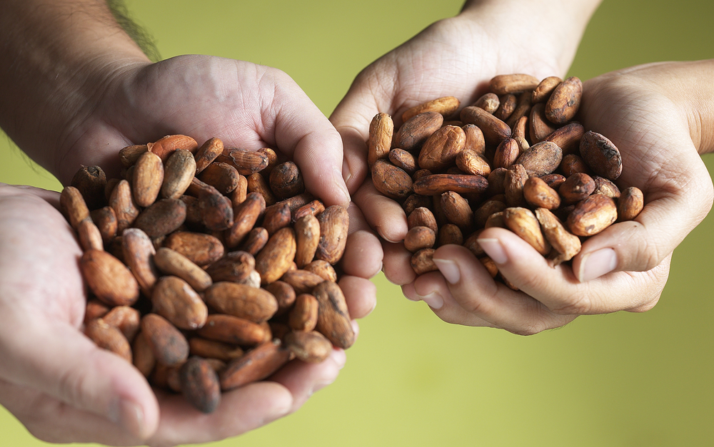 КБЖУ какао бобов