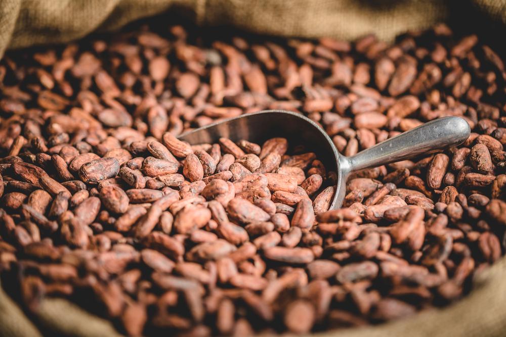 Импорт какао бобов в Россию