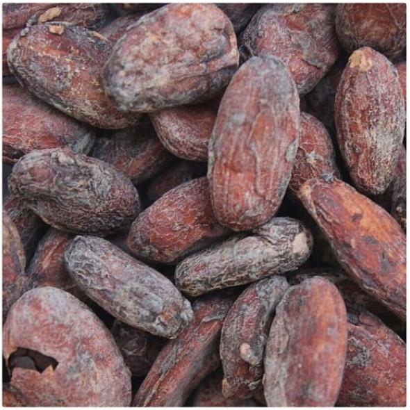 качество какао бобов